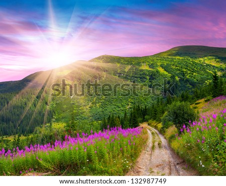 Beautiful summer landscape in the mountains with pink flowers. Sunrise - stock photo