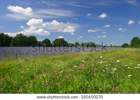beautiful summer landscape of flowering meadows, bright blue sky, white clouds and groves on the horizon on a sunny day - stock photo
