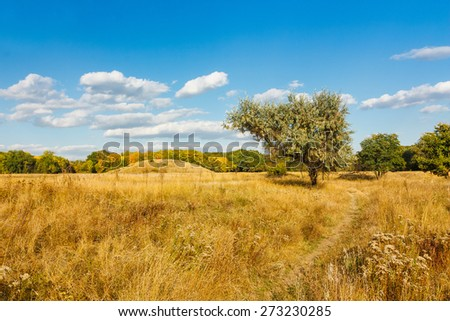 Beautiful summer landscape. Rural meadow, road and tree. Donetsk. Ukraine - stock photo