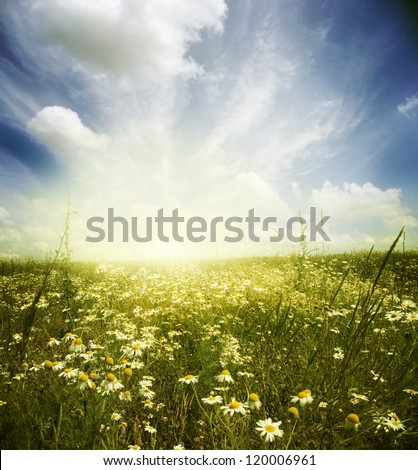 Beautiful summer landscape with daisies - stock photo