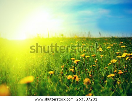 beautiful summer landscape with dandelions in foreground - stock photo