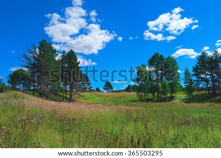 Beautiful summer landscape with forest, grass, sky and clouds - stock photo