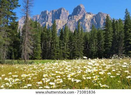 Beautiful summer landscape with Rocky Mountains in the background in Jasper National Park, Alberta, Canada - stock photo
