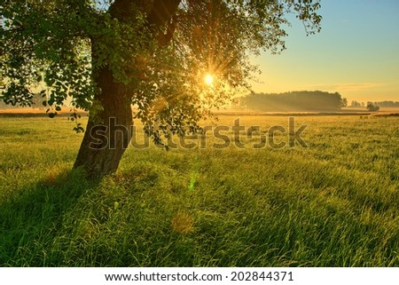 Beautiful summer landscape with sunset and lonely tree - stock photo