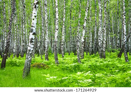 beautiful summer landscape with the forest and green grass - stock photo