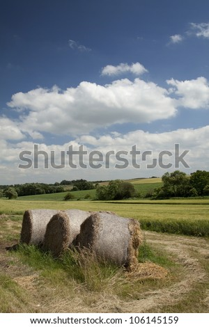 Beautiful summer meadow - stock photo