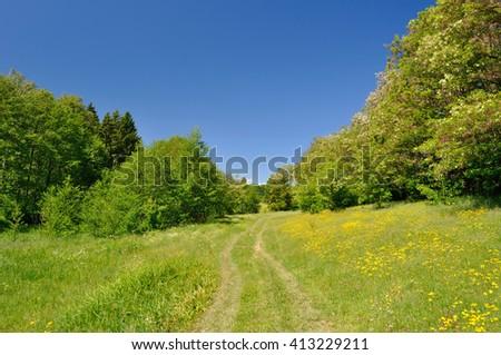 beautiful summer meadow landscape - stock photo