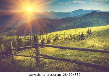 Beautiful summer mountain landscape at sunshine.View of the meadow fenced fence and cows grazing on it. - stock photo