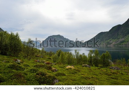 beautiful summer mountains and fjord
