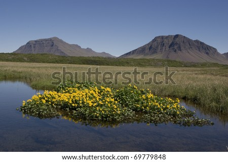 Beautiful summer  picture from Iceland - stock photo