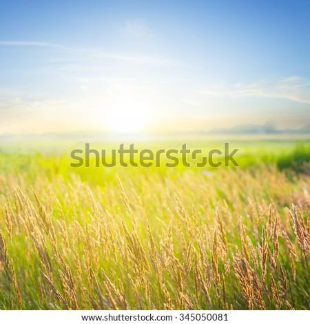 beautiful summer prairie scene - stock photo