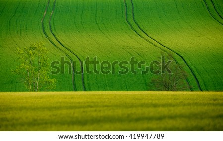 Beautiful summer rural landscape with plowed field curves and wheat grain. Rural landscape. Spring landscape. Beautiful countryside curve. Rural background. Abstract color curves with tree - stock photo