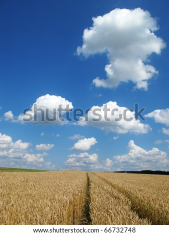Beautiful summer sky over the field path. - stock photo