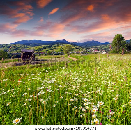 Beautiful summer sunrise in the mountain village with a field of camomiles - stock photo