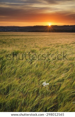 Beautiful Summer sunset landscape over agricultural crop fields - stock photo