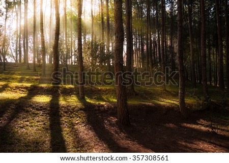 Beautiful sunbeams in forest - Thailand - stock photo