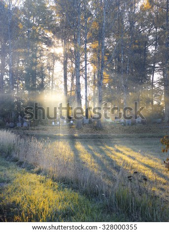Beautiful sunbeams in green forest - stock photo