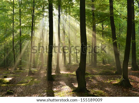 Beautiful sunbeams in magic beach forest - Poland - stock photo