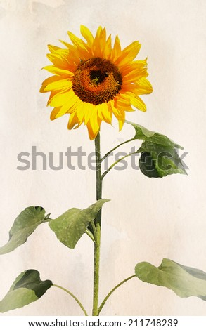 Beautiful sunflower. Artistic watercolor painting style with texture  - stock photo