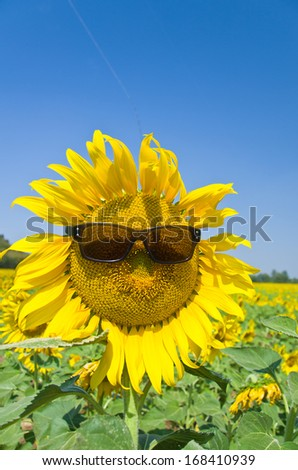 Beautiful Sunflower field in Lopburi, Thailand