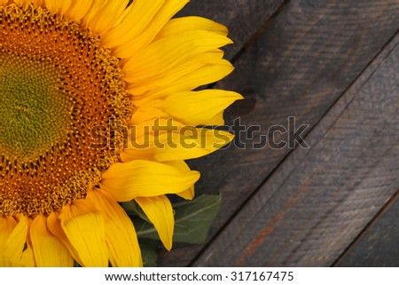 Beautiful sunflower on wooden background - stock photo