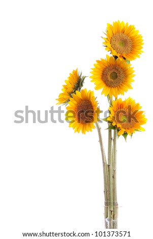 beautiful sunflowers bouquet isolated on white background with copyspace - stock photo