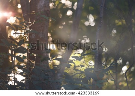 Beautiful sunlight in forest with fog - stock photo