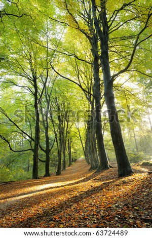 Beautiful sunlight in the autumn  forest. - stock photo