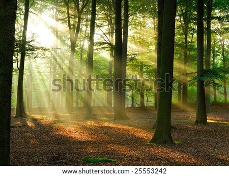 Beautiful sunlight in the forest. - stock photo