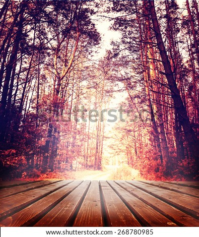 Beautiful sunlight in the  forest with wood planks floor - stock photo