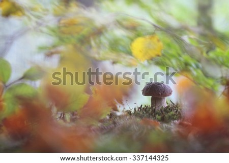 Beautiful sunny and rainy yellow color autumn season leaves with sunlight flare background - stock photo