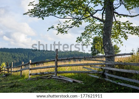 Beautiful sunny day is in mountain landscape. Carpathian, Ukraine.  - stock photo