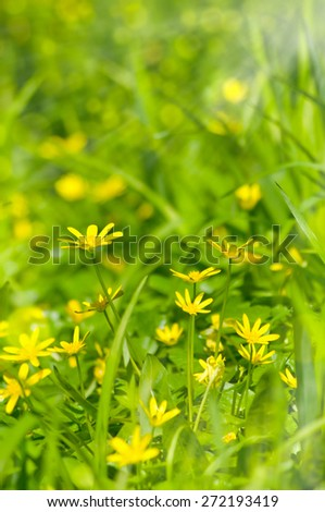 beautiful sunny field floral with flowers summer or spring background with soft blurs bokeh lights - stock photo
