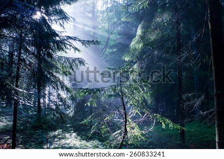 Beautiful Sunny Morning in the Forest with Sunbeams shining through the branches  - stock photo