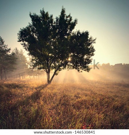 Beautiful sunny morning with the rays in fog and the lonely tree - stock photo