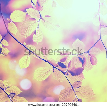 Beautiful sunny retro autumn forest tree branches with leaves. Vintage filter effect used. - stock photo