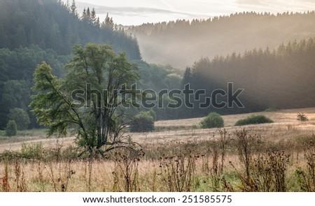 Beautiful sunrise in a field. Tree in the foreground and mountains in the background.