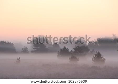 Beautiful sunrise in a foggy landscape - stock photo