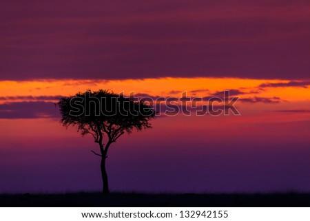 Beautiful sunrise in Masai Mara, Kenya - stock photo