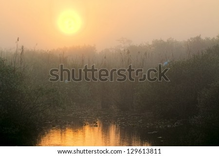 Beautiful sunrise in the Florida Everglades national park - stock photo