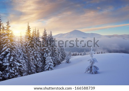 Beautiful sunrise in the mountains in winter. Carpathian mountains, Ukraine, Europe. View of Mount Goverla - stock photo