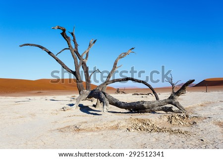 beautiful sunrise landscape of hidden Dead Vlei in Namib desert with dead acacia tree, best place of Namibia