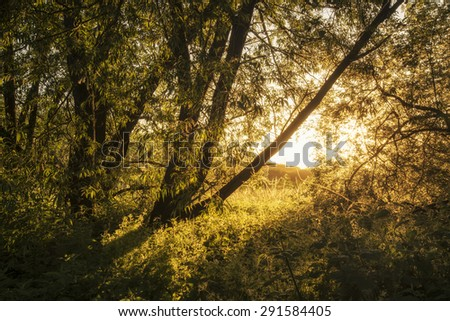 Beautiful sunrise landscape of sunlight glowing on footpath in trees - stock photo