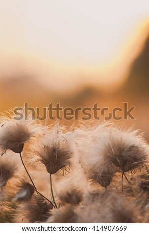 Beautiful sunrise light through thorns or bur flowers with copyspace. Vertical image - stock photo