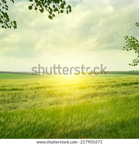 Beautiful sunrise  on spring field - stock photo