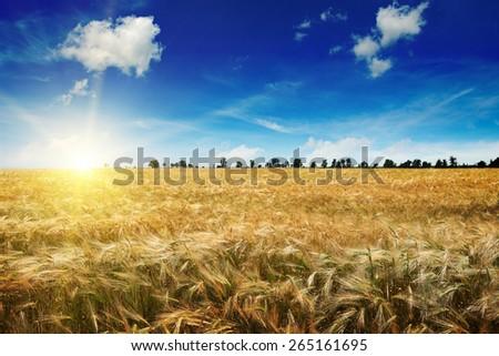 Beautiful sunrise over a field of wheat - stock photo