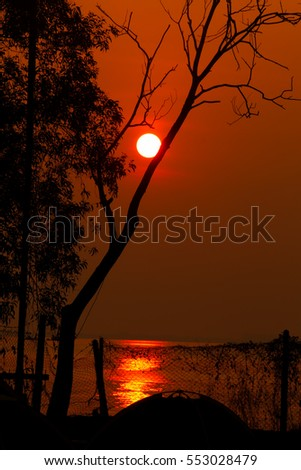 beautiful sunrise over the beach behind the trees