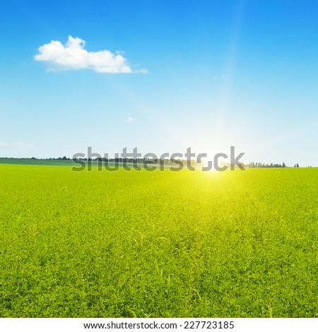beautiful sunrise over wheat field - stock photo