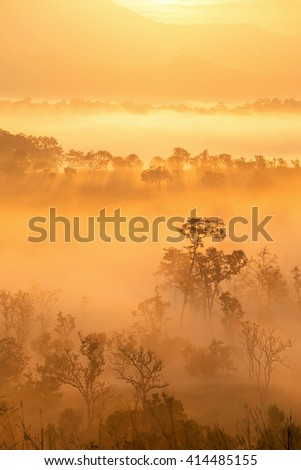 Beautiful sunrise scene with misty and tree in morning in forest valley in khao kor mountain - stock photo