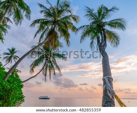 Beautiful Sunrise-Sunset over ocean on Maldives Island Resort, copy space, message, Golden sky, Blue sky with coconut Tree